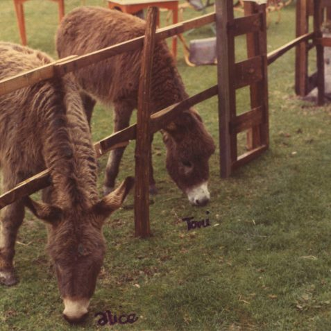 Mimi Brown's donkeys | Jennifer Drury: personal collection
