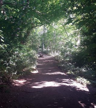 Three Cornered copse, Hove, pathway through woods | Avril Solomon