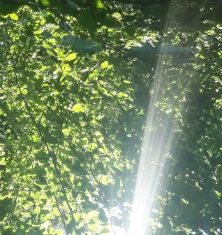 Sunlight through the leaves, Three Cornered copse, Hove   Avril Solomon