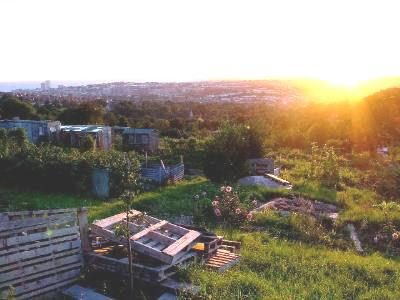 A tour of Brighton and Hove's allotments