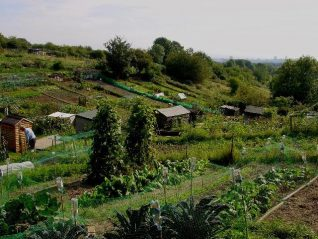 Roedale Valley Allotments | Photograph by Simon Tobitt