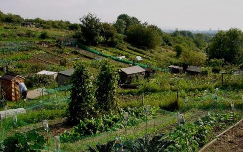 A very brief history of allotments