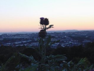 Artichoke, view of Round Hill | Photograph by Simon Tobitt