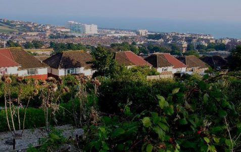 A chronicle of Brighton and Hove allotments