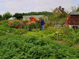 Horsdean Allotment Plot (Jenn Price and Marigold Rogers) | Photograph by Simon Tobitt