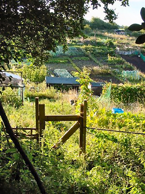Roedale Valley allotments | Photo by Simon Tobbit