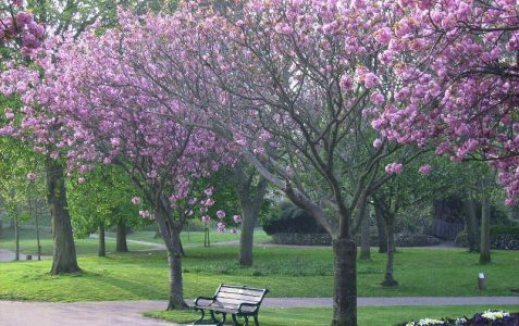 Brighton and Hove in bloom