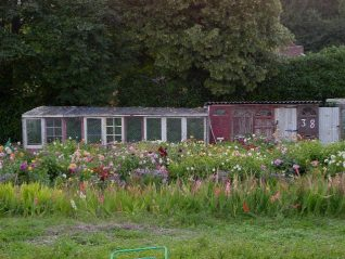 Flower beds and sheds, Tenantry Down | Photo by Simon Tobitt