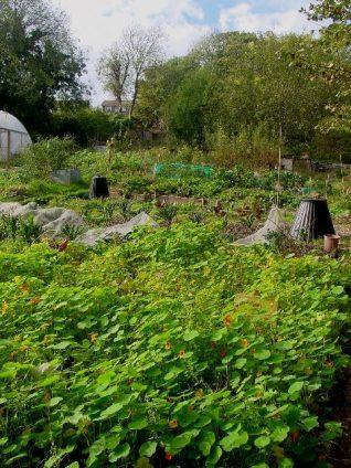 Moulsecoomb Forest Garden, Moulsecoomb Place site | Photo by Simon Tobitt