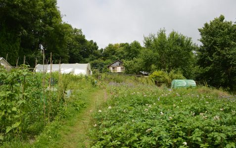 Moulsecoomb Forest Garden & Wildlife Project