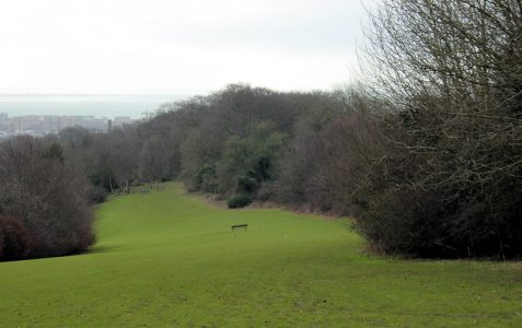 Three-cornered copse