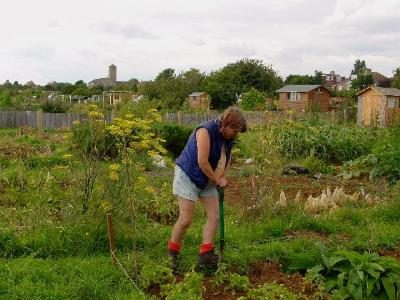 Ruth's allotments