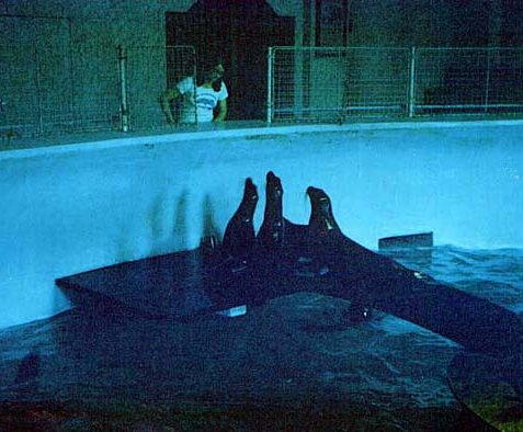 Tricia Leonard working at the aquarium in 1972. <a href=