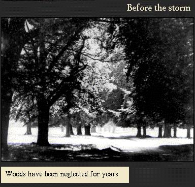 Woods have been neglected for years | Image from the 'My Brighton' exhibit