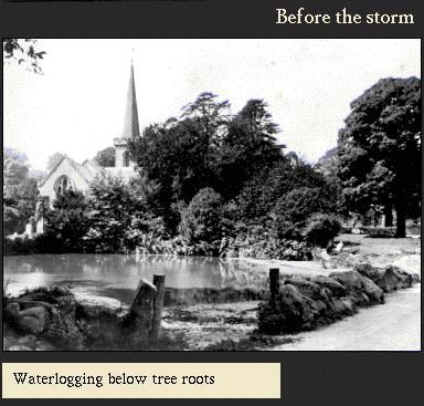 Waterlogging below tree roots | Image from the 'My Brighton' exhibit