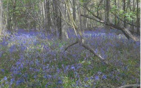 Childhood memories of Stanmer woods