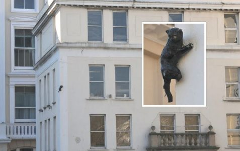 The cat on Lace House