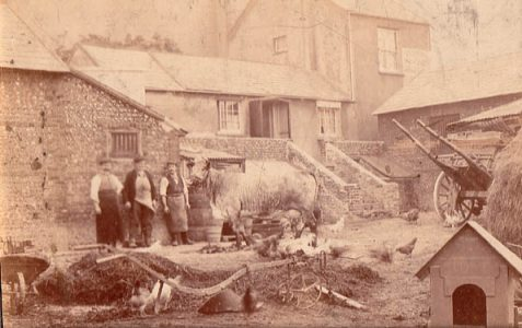 Photo of farm labourers and livestock
