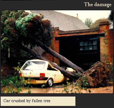 Car crushed by fallen tree | Image from the 'My Brighton' exhibit