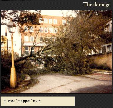 A tree 'snapped' over | Image from the 'My Brighton' exhibit
