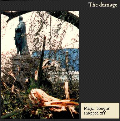 Major boughs snapped off | Image from the 'My Brighton' exhibit
