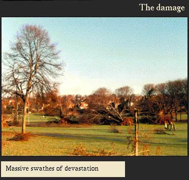 Massive swathes of devastation | Image from the 'My Brighton' exhibit