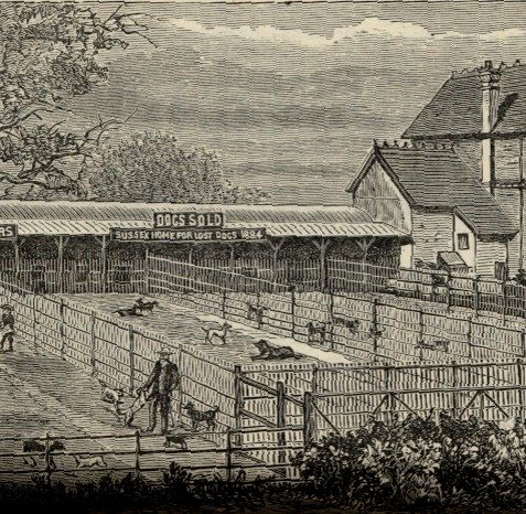 'The Brighton and Sussex Home for Lost & Starving Dogs' was set up at 4, Robertson Road in 1884 | From the private collection of Andy Grant