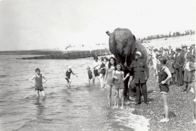 Elephant on the beach | Royal Pavilion & Museums, Brighton & Hove