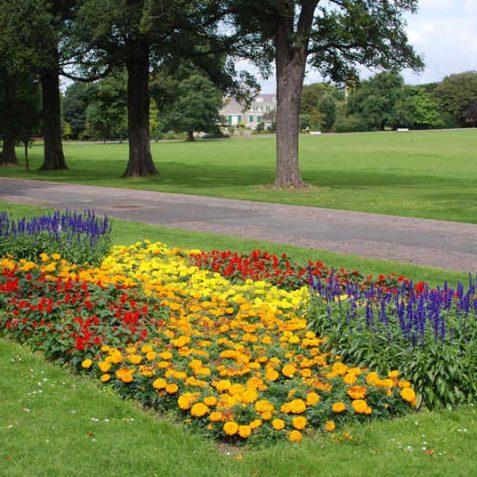 Preston Park flower beds | Photo by Tony Mould