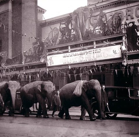 Elephants outside the Hippodrome, Middle Street (date unknown) | Photo reproduced with permission from Brighton History Centre