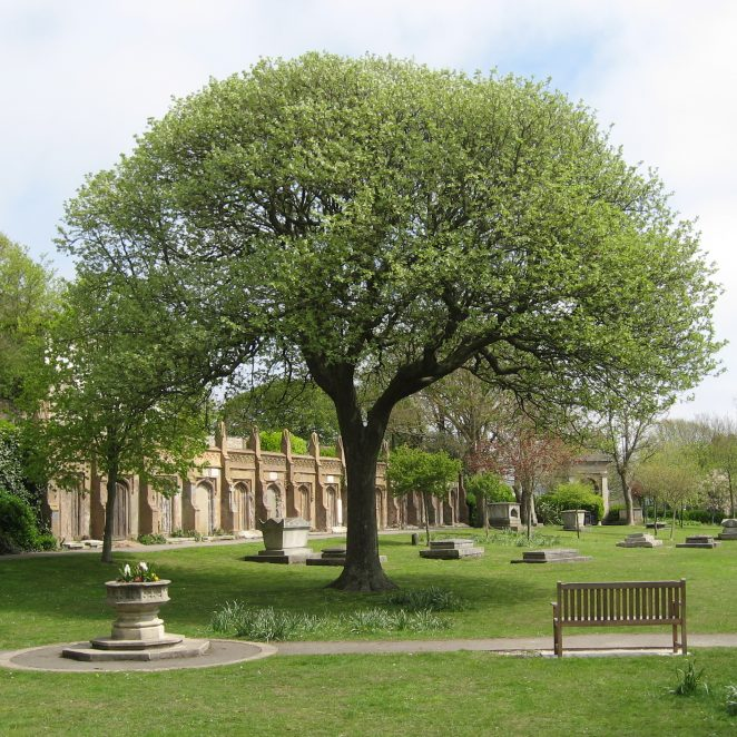 Trees bursting into leaf in front of AH Wilds' burial vaults - 1 May 2010 | Photo by Bob Young