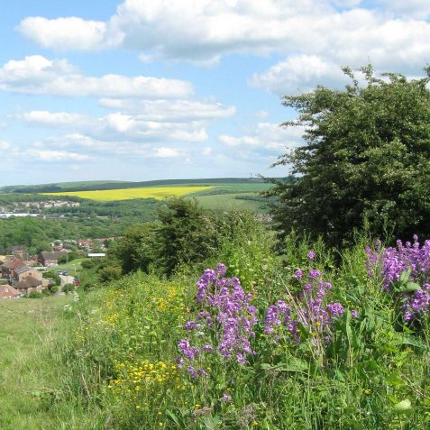 Dame's Violet and view looking towards Coldean and beyond | Peter Whitcomb
