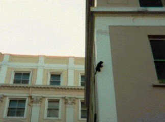 Cat on the side of building in New Steine | From the private collection of Mike Stone