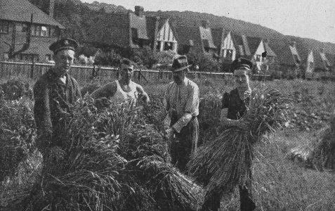 Polish Sailors help with the Harvest?