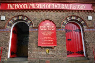 Booth Museum of Natural History | Photo by Tony Mould