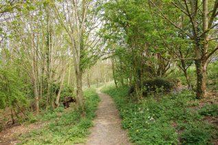 Hodshrove Woods | Photo by Tony Mould