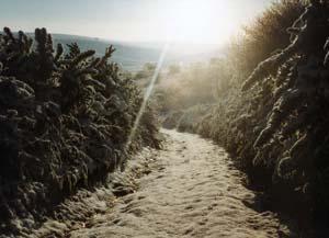 Newmarket Hill