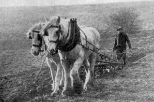 Frank Harris ploughing in Ovingdean c1930 | From the private collection of Jennifer Drury