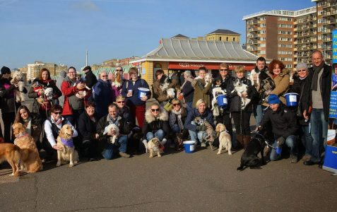 Pooches promenading for charity