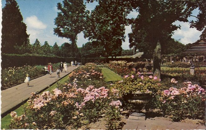 Preston Park Rose Garden | From the private collection of Sue Loveridge