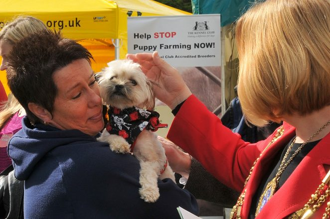 The Mayor says 'Hello' to a Pup Aid pup | Photo by Tony Mould