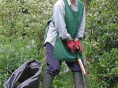Meet the Royal Pavilion Gardeners