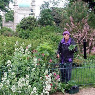 Gardener at the Royal Pavilion   Photo by John Desborough