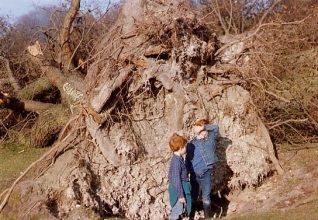 Uprooted tree in Queens Park | From the private collection of John Ballance