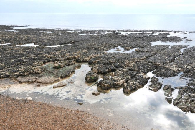 Rock pools on the Undercliff Walk | Photo by Tony Mould