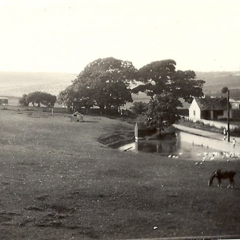Ovingdean village pond pre-1932. Peartree Cottages were on the right. | From the private collection of Carol Blake