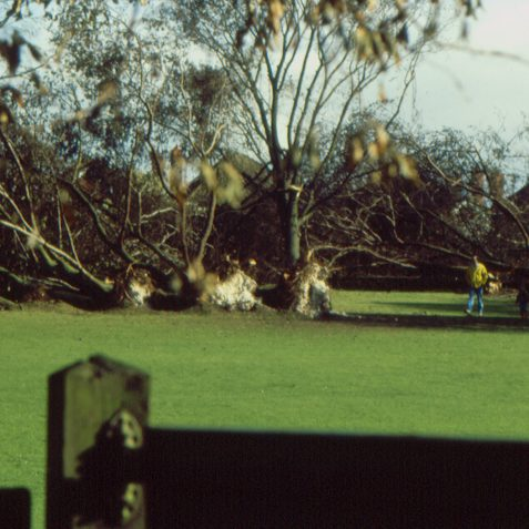 North gate after the storm October 1987 | Photo by K W Barrington
