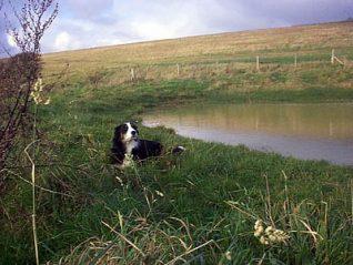 Simmonds Pond, Bevendean