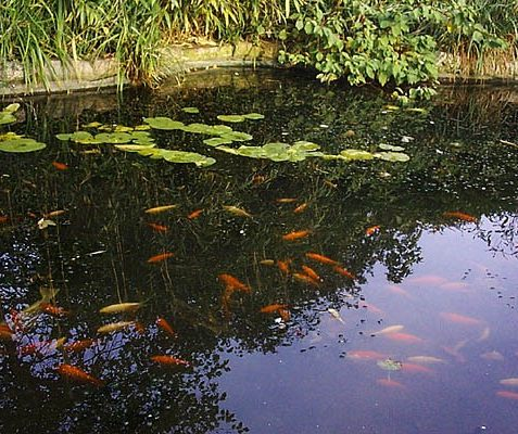 Pond in St Anne's Well Gardens | Photo taken by Julia Powell, 2002